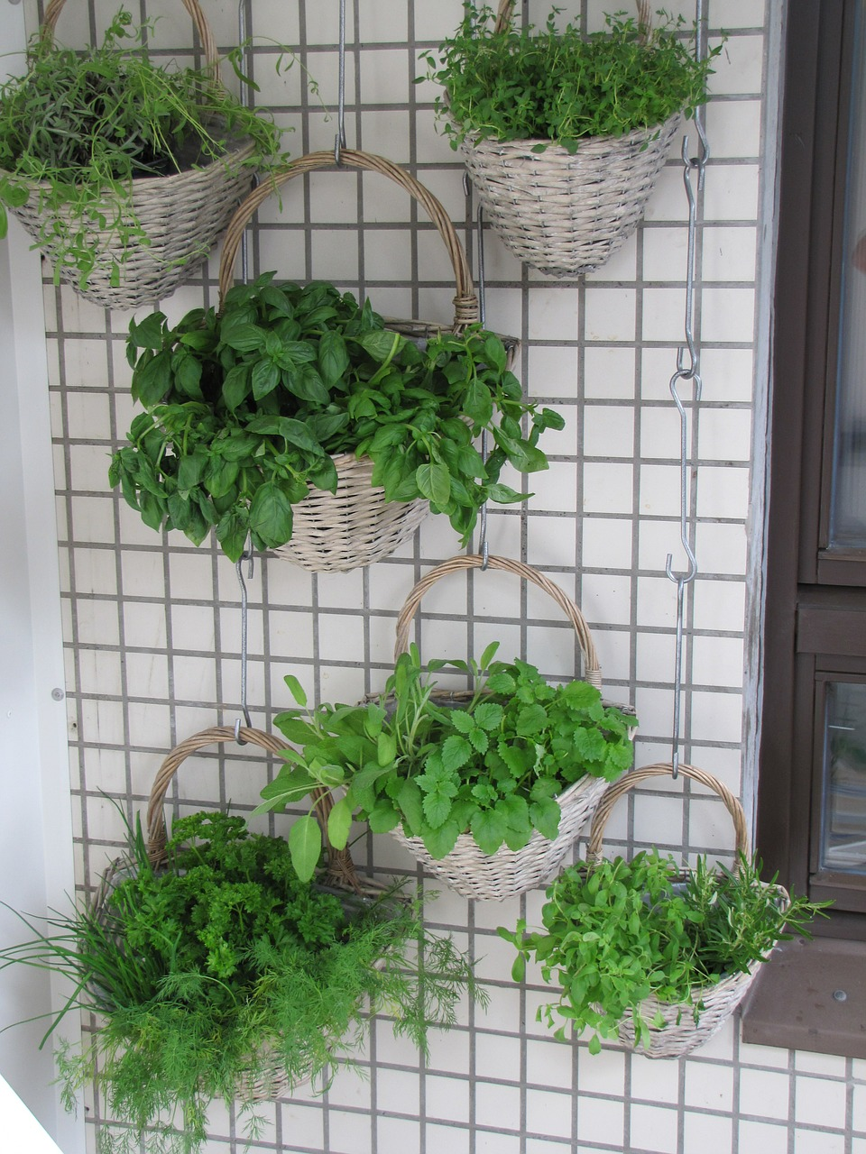 Photo of an Herb Wall